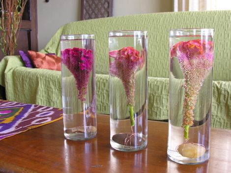Pink, fuchsia and orange celosias submerged in clear hurricane vases