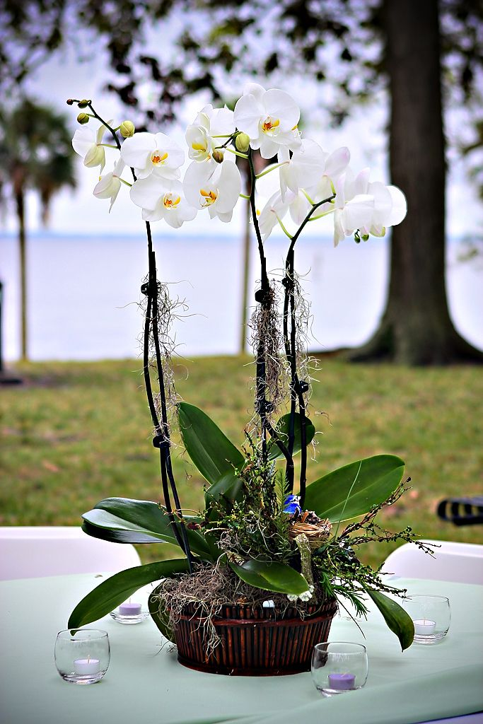 This is a beautiful close up of a white orchid centerpiece used in an outdoor wedding.