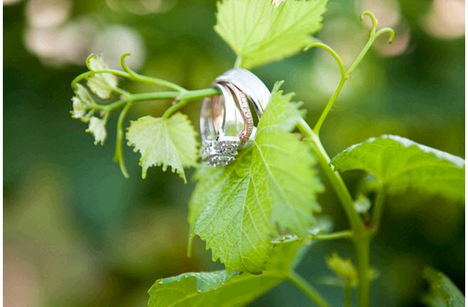 Artistic wedding rings engagement ring shot rings hang from beautiful leaf