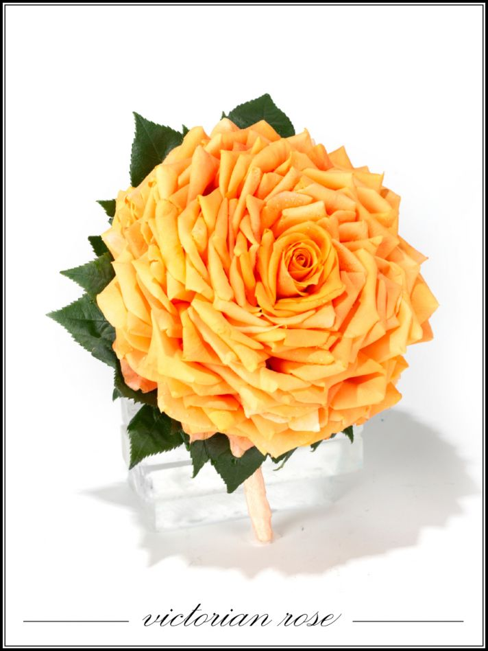 Vibrant Victoria Rose wedding flowers