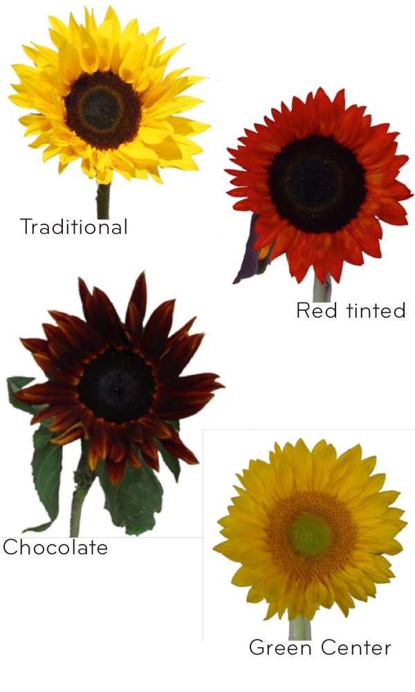 Credit Sunflower wedding ideas wholesale wedding flowers from