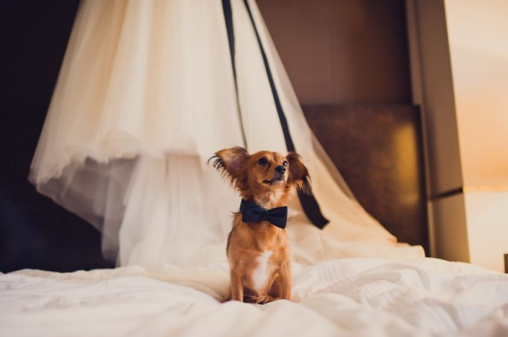 what grooms want wedding planning ideas incorporating dogs