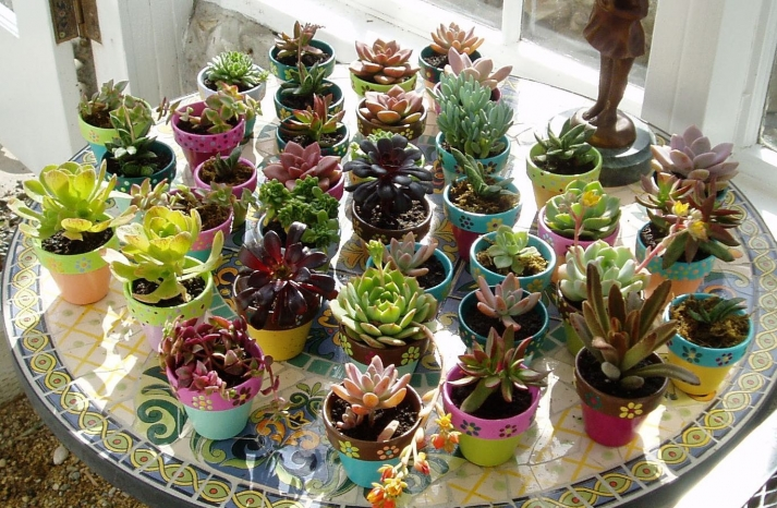 Assorted potted succulents for wedding favors