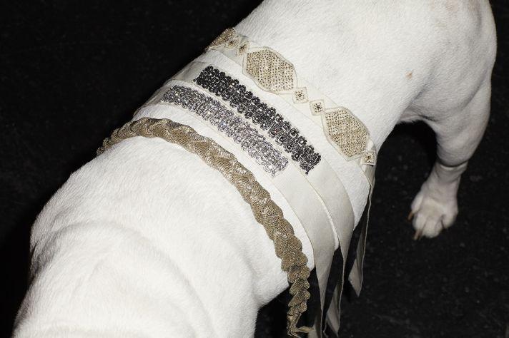 beaded wedding sashes for dog ring bearers flower girls