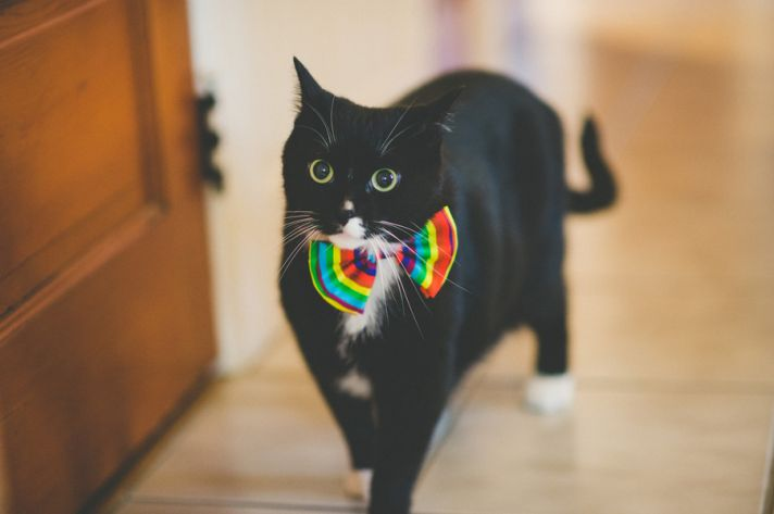 Colorful Cat